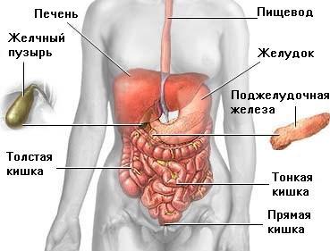 Варикоз брюшной полости симптомы